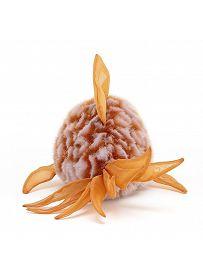 Jellycat Plüschtiere: Kugelfisch Grumpy, orange Rückseite | Kuscheltier.Boutique